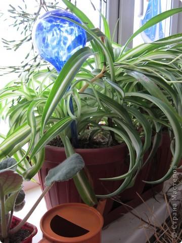Поилочки для растений фото 2
