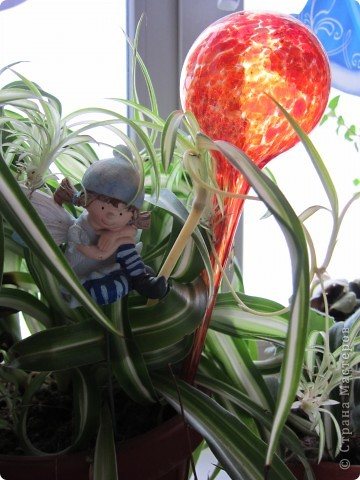 Поилочки для растений фото 1