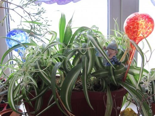 Поилочки для растений фото 3