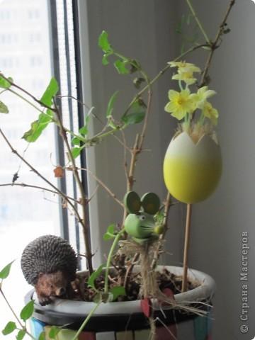 Поилочки для растений фото 5