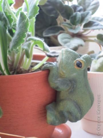 Поилочки для растений фото 6