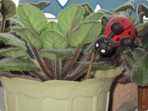 Поилочки для растений фото 7