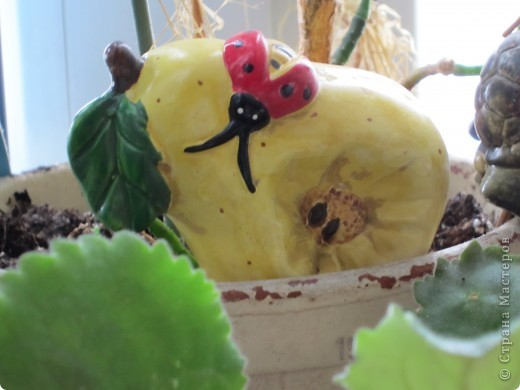 Поилочки для растений фото 8