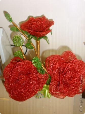 вот такие розы фото 1