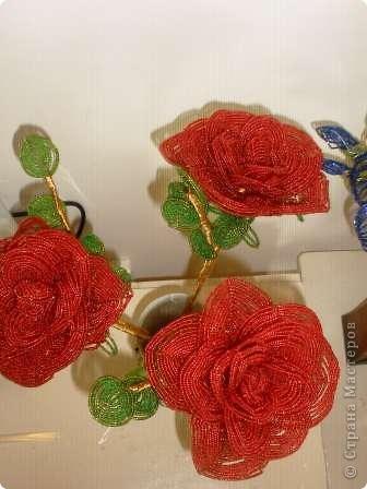 вот такие розы фото 3