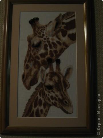 """работа моей мамы """"жираф""""  фото 2"""