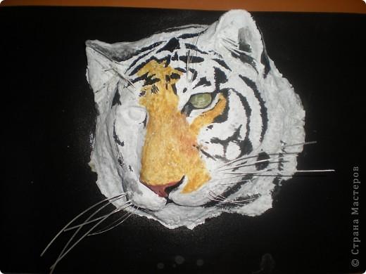 Мой тигруля фото 3