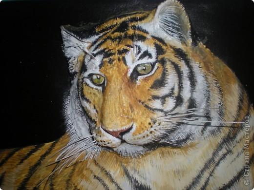 Мой тигруля фото 1