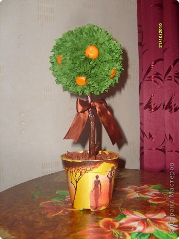 Мандариновое дерево фото 2