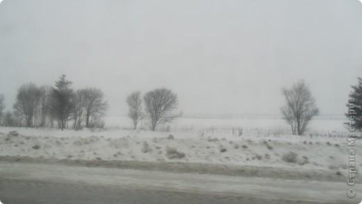 зима, снегири фото 4