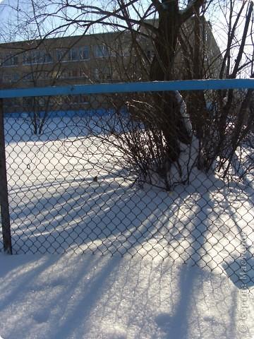 Я живу на окраине города. Этой зимой выпало очень много снега. фото 2
