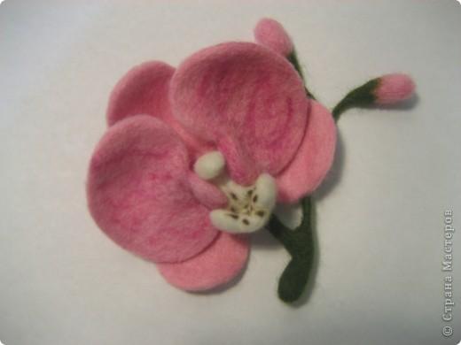 орхидейка фото 5