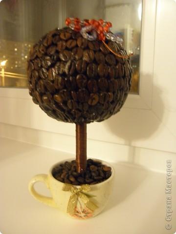 Кофейное дерево 2 фото 1