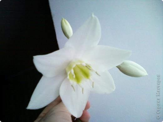 Впервые после переезда на новую квартиру у нас расцвел цветок фото 3