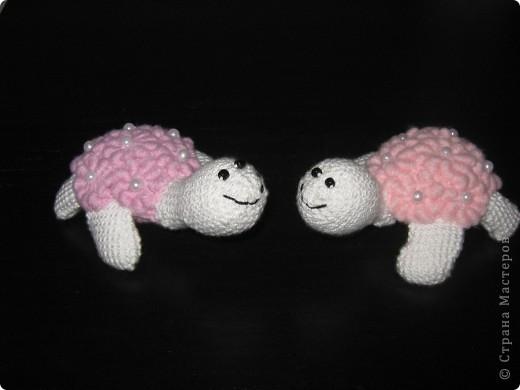Жемчужные черепашки. фото 1