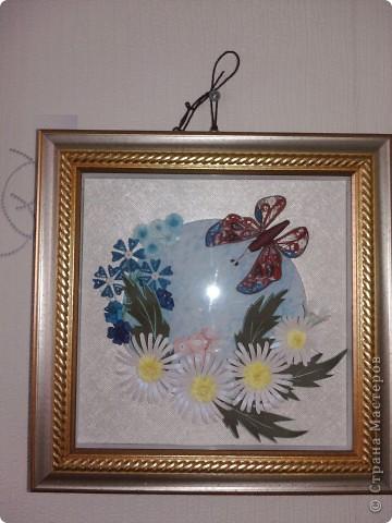Бабочка и ромашки фото 1
