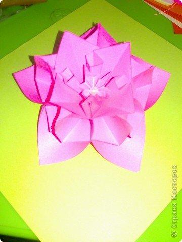 домашний цветочек гиацинт фото 7