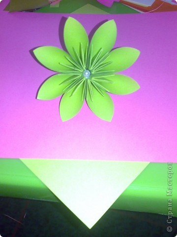 домашний цветочек гиацинт фото 6