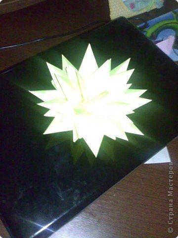 домашний цветочек гиацинт фото 5