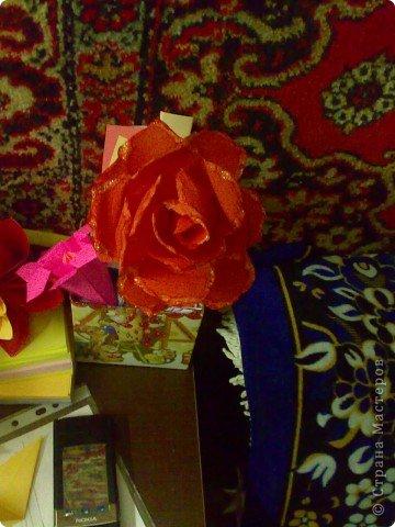 домашний цветочек гиацинт фото 4