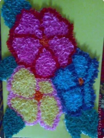 домашний цветочек гиацинт фото 2
