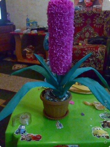 домашний цветочек гиацинт фото 1