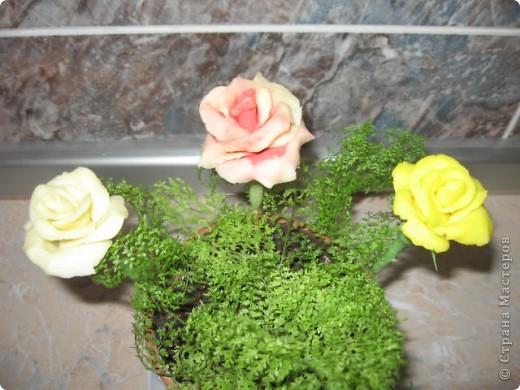 Мои первые розы фото 1