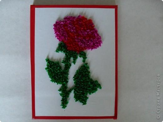 роза фото 1