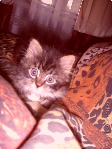 Привет!!!!    Меня  зовут  Мася; это  я еще  маленькая!!! фото 1