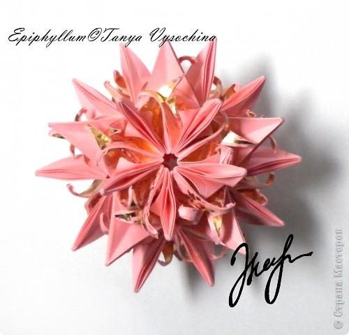 Epiphyllum©Tanya Vysochina фото 1