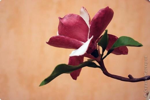 Хочу всех поздравить с наступающим Днем влюбленных! Пусть в душе всегда будет весна, а в сердце - любовь! фото 5