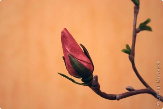 Хочу всех поздравить с наступающим Днем влюбленных! Пусть в душе всегда будет весна, а в сердце - любовь! фото 4