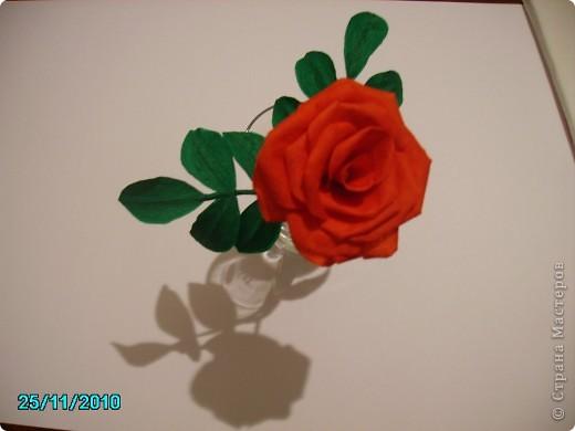 Мой розы. фото 1
