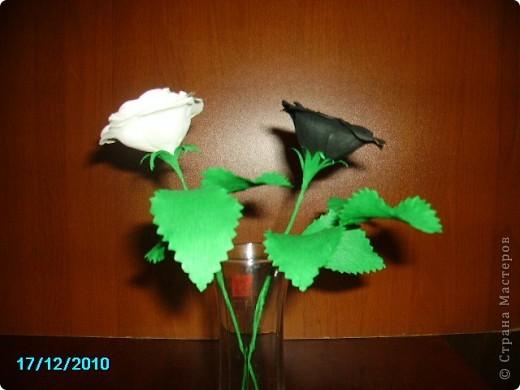 Мой розы. фото 2
