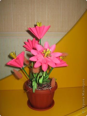 Вдохновленная работами Эрны, я решила попробывать сделать подобные цветы. Получилась такая смешанная техзника Оригами (кусудама) и квиллинг. Цветы выпилняла по МК http://stranamasterov.ru/node/18223 фото 2