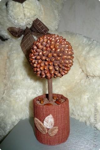 Вот такое выросло деревце из фасоли)))) Мне понравилось))) фото 1