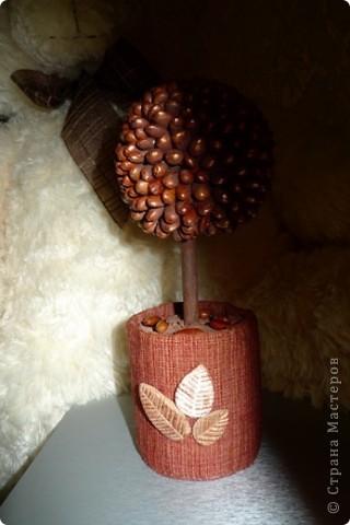 Вот такое выросло деревце из фасоли)))) Мне понравилось))) фото 3