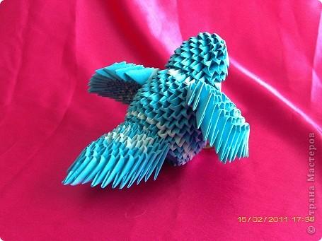 синяя птица фото 2