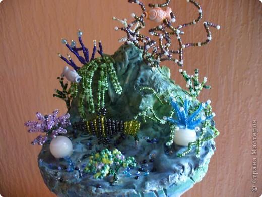 Коралловый риф. фото 2