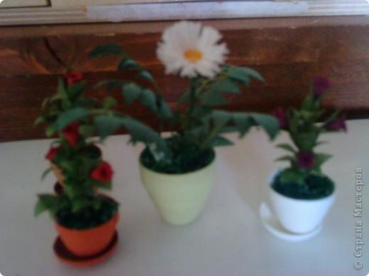 мини-цветы фото 1