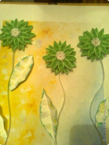 Зелёные цветы фото 3