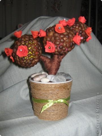 Кофейно-розовое дерево фото 1