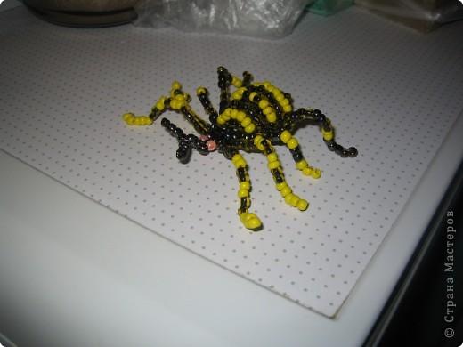 у нас дома завелась семейка пауков)))))))) фото 2