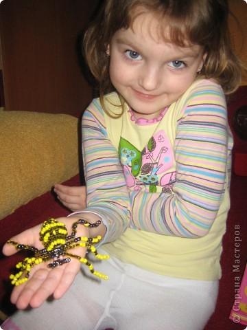 у нас дома завелась семейка пауков)))))))) фото 6