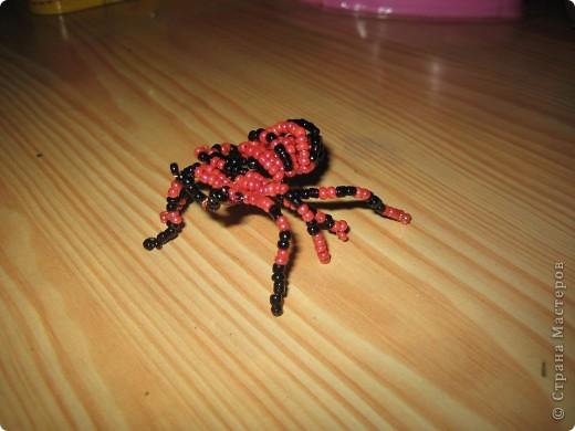у нас дома завелась семейка пауков)))))))) фото 4