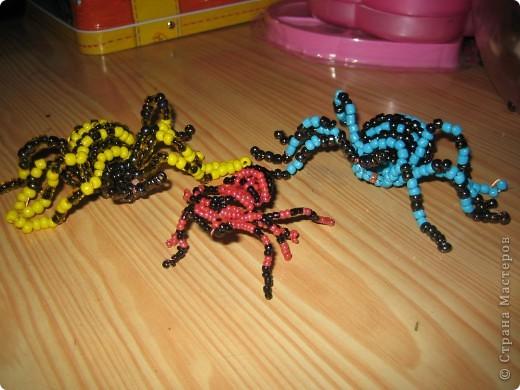 у нас дома завелась семейка пауков)))))))) фото 1