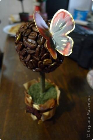 Наконец-то и в моем саду появилось кофейное деревце! Такое крошечное получилось))) фото 3