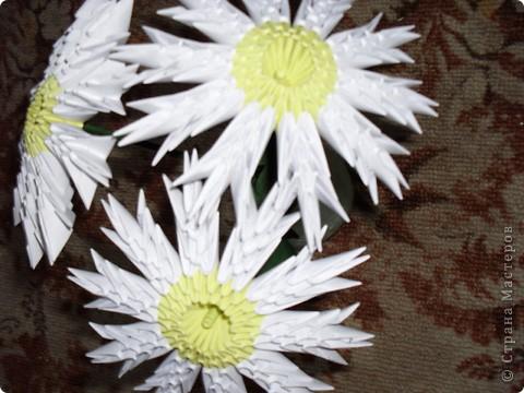 Георгины фото 3