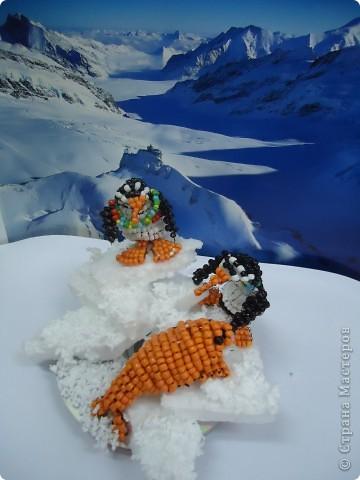 Там ,где всегда снега... фото 7