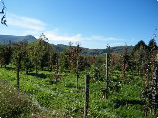 Яблочный праздник. Октябрь 2010 фото 29